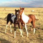 Azaliah Stud's Foals